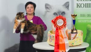 выставка кошек мейн кун