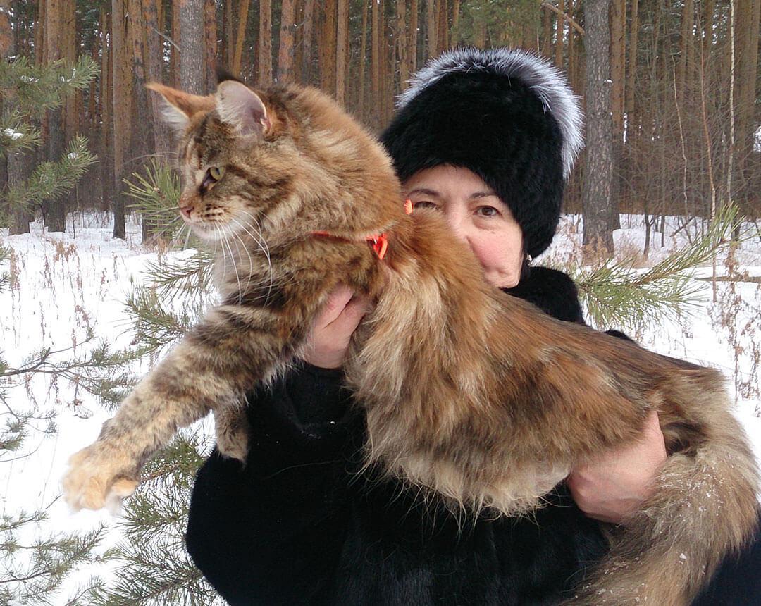 питомник мейнкунов Екатеринбург